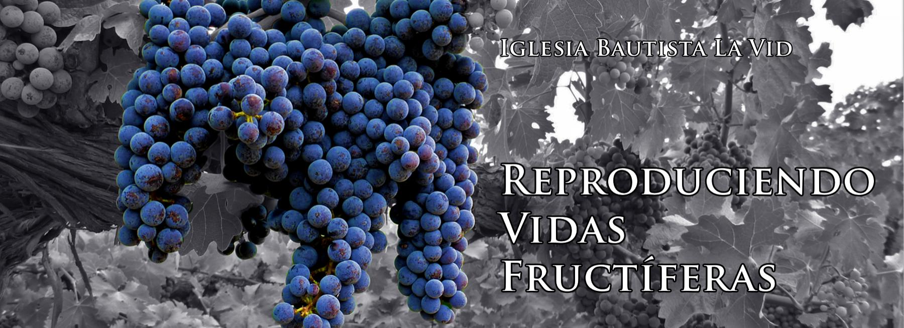 03_color splash grapes slider